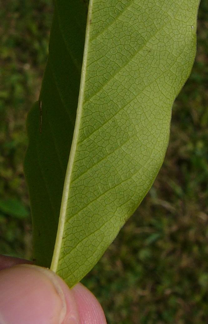 Küchenfarbe Magnolie Weiß ~ magnolia weiss
